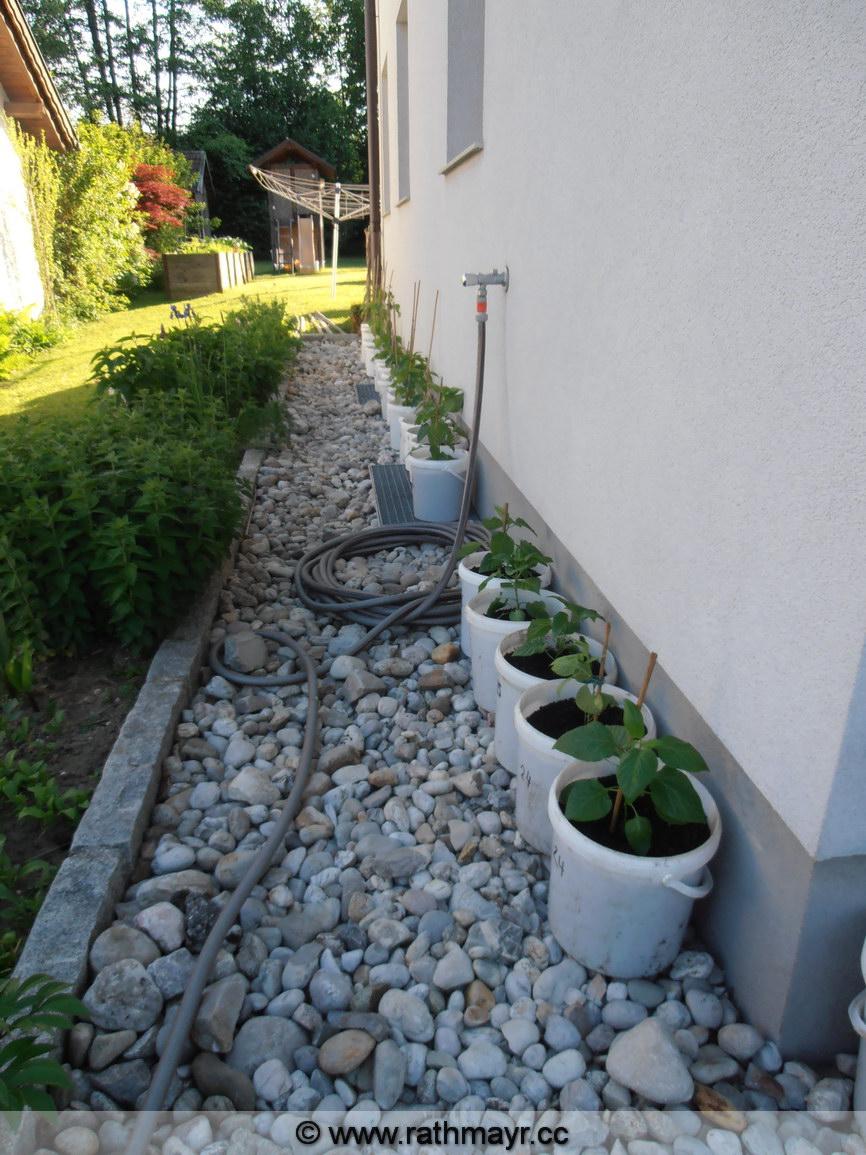 Auspflanzen