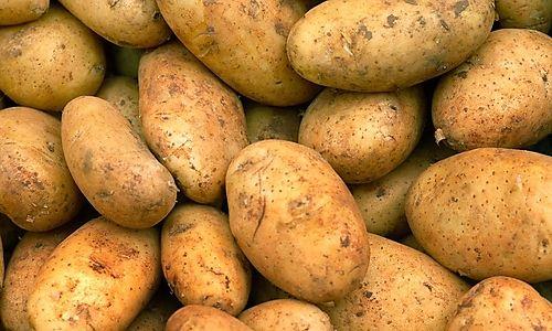 Erdapfel - Kartoffel