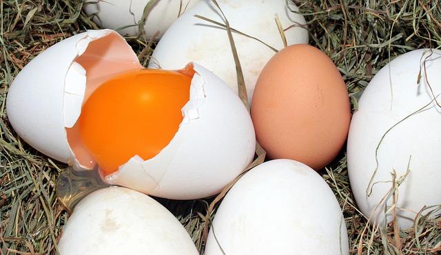 Das Ei: Eine Nährstoffbombe!