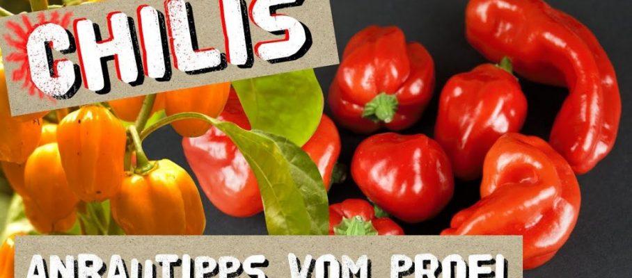 Chili Anbautipps vom Profi + Chilisorten